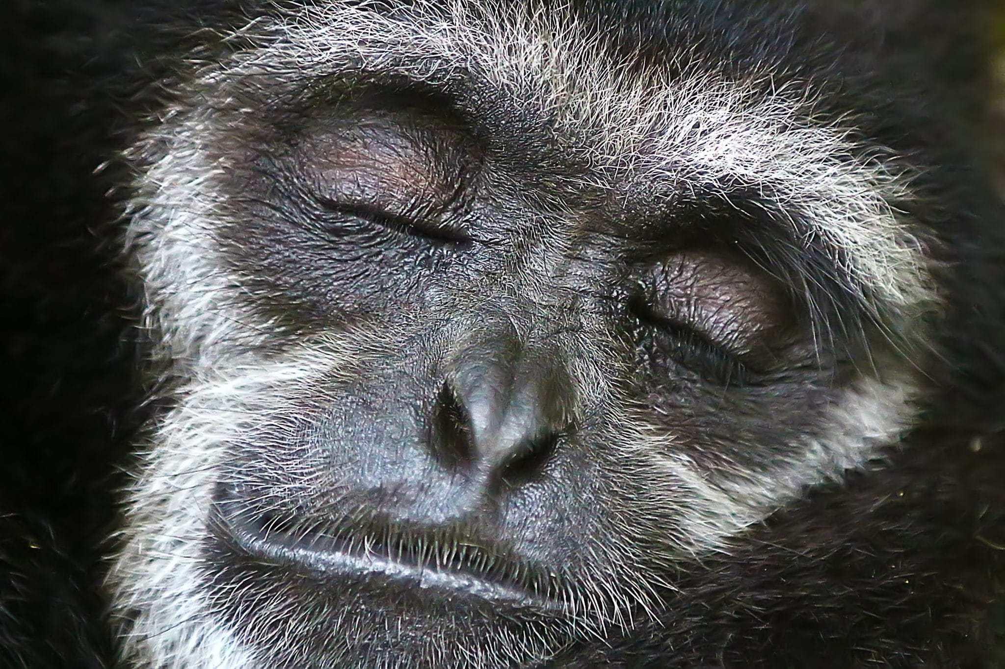 Tem je innerlijke aap: evolutionair bewustzijn voor meer persoonlijk leiderschap